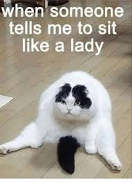 Cat Meme Ladies - when someone tells me to sit like a lady grumpy cat meme on me me