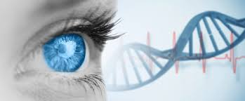 Gene Therapy For Blindness Gene Therapy For Macular Degeneration Brightfocus Foundation