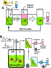 active biopolymers in green non conventional media a sustainable