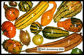 the world of gourds