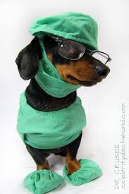 Halloween Costumes Miniature Dachshunds 133 Dog Halloween Costumes Images Animals Dog