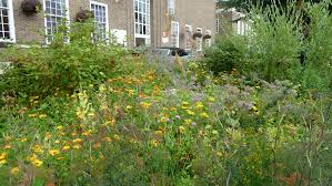 5 simple tips to turn your yard into pollinator paradise u2013 cool