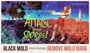 Getting Rid Of Mold In Basement by How To Get Rid Of Mold Remove Mold Guide Do It Yourself