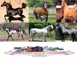horseland chili horse horseland scarlet deviantart
