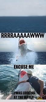 Funny Shark Meme - me shark
