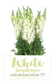 wedding flowers names white wedding flowers guide types of white flowers names pics