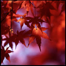 sexy color the best of autumn a gallery on flickr