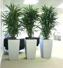low light indoor trees tall indoor trees ubound co