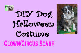 diy halloween dog costume circus clown scarf youtube