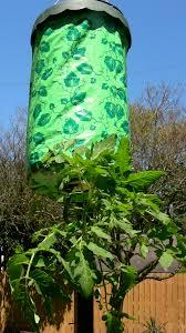Tomato Tree Tomato Tree Vs Soil Vs Planter Get Rich Slick