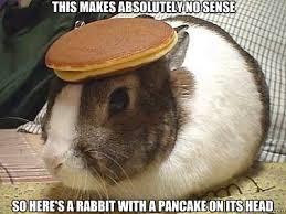 Makes No Sense Meme - this makes absolutely no sense so here s a rabbit with a pancake on