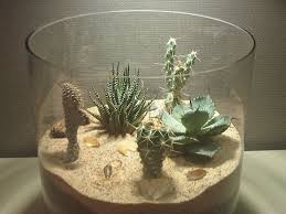 How To Take Care Of Flowers In A Vase How To Not Build A Cactus Terrarium On Line Guide To The Positive