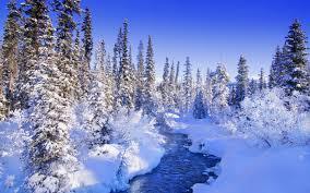 winter snow 8997 dongxue series landscape scenery