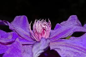 free images nature blossom leaf petal bloom color botany