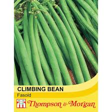 climbing bean u0027fasold u0027 thompson u0026 morgan