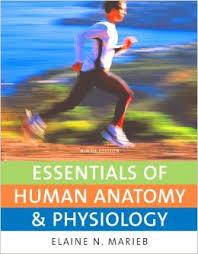 Human Anatomy And Physiology Marieb Hoehn Pearson Anatomy And Physiology Study Guide Page 3 Awesome