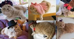 Scottish Halloween Costume Halloween 2012 Pet Costumes Cat Hats Kitty Wigs Scottish