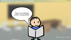 okazaki fragments definition u0026 overview video u0026 lesson