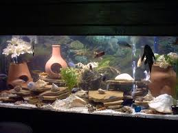 captivating unique fish tank decorations 17 on home remodel ideas