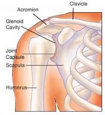 Human Shoulder Diagram Adhesive Capsulitis Information Nad Anatomy