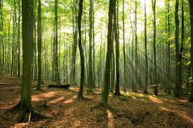 can t see the wood for the trees voice