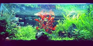 Aquascape Aquarium Plants Aquatic Plants U2013 Freshwater Aquarium Plants Chicago