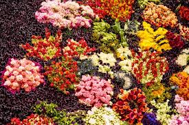 real flowers living painting with 26 500 real flowers unveiled at