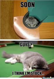 Soon Cat Meme - rmx soon cat by brianstewie meme center