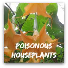 indoor plants pictures