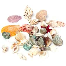 1 set mixed mediterranean style starfish shells sea shells beach
