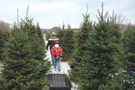 local trees available from delaware farms cape gazette