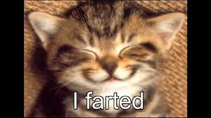 Cute Kittens Meme - 20 best of cute kitten quotes kittens cute wallpapers