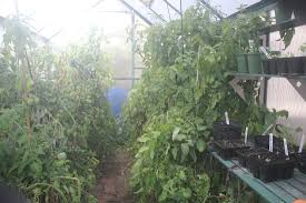 greenhouses australia winter gardenz news and blog for winter