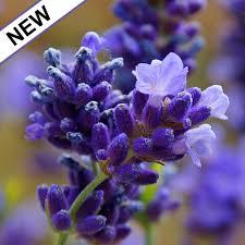 Garden Botanicals Lotus Garden Botanicals Dunneiv Org
