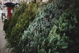 where to buy a real tree in