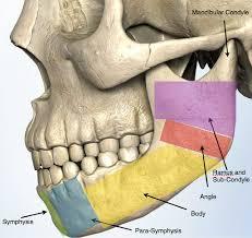 Human Jaw Bone Anatomy Jaw Fracture Trauma