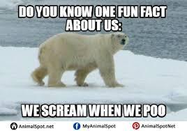 Funny Bear Memes - polar bear memes