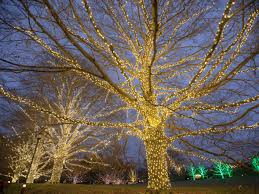 11 spots around philly to see christmas lights