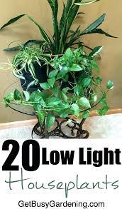good low light plants indoor plants low light best low light plant low light indoor plants