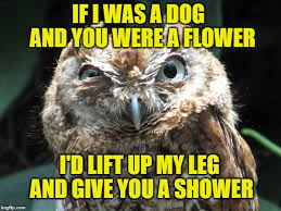 Owl Memes - image tagged in ornery owl memes owl owls imgflip