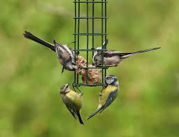 wild bird care feeding and watering garden birds