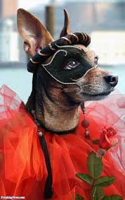 animal halloween costumes pictures gallery freaking news