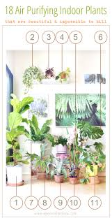 best low light house plants 12 easy air purifying indoor plants for beauty well being a