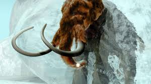 bring woolly mammoth
