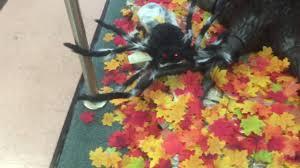 stormtrooper costume spirit halloween spirit halloween store miami 2016 youtube