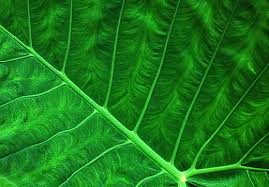 fractal pattern in nature nature s pattern photography 35 outstanding photos noupe