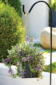 Hanging Succulent Planter by Succulent Container Gardens That Still Look Good Even If It U0027s
