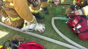 California Wildfire Animal Rescue by Firefighters From Bakersfield Fire Department Revive Unconscious