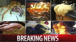 thanksgiving kitchen nightmares revealed in pictures breaking