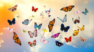 download wallpaper 1920x1080 butterfly sky collage photoshop